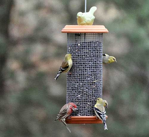 Decorative Bird Feeders - Clay Saucer Tube Feeder - Clay Pot Crafts
