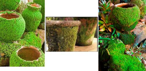 Moss Pots - Terracotta Landscape - Clay Pot Crafts