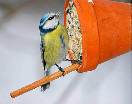 Tilted Decorative Bird Feeders - Clay Pot Crafts